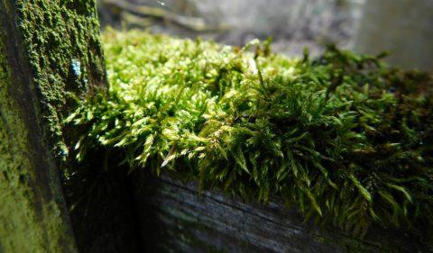 clôture végétale